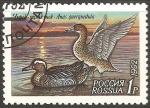 Sellos de Europa - Rusia -  Anas querquedula-