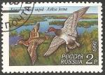 Sellos de Europa - Rusia -  Aythya ferina-porrón europeo