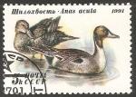 Sellos de Europa - Rusia -  Greylag geese-ganso silvestre