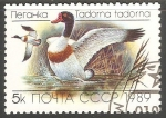 Stamps Russia -  Tadorna tadorna-Pato-blanco