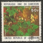 Sellos de Africa - Camerún -  Planta medicinal, piper capense