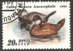 Sellos del Mundo : Europa : Rusia : Cabka 0xyura leucocephala-pato-de-rabo-alçado