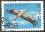 Stamps Russia -  Ciconia ciconia-cigüeña blanca
