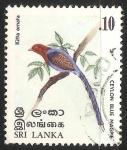 Sellos de Asia - Sri Lanka -  Ceylon blue magpie-urraca azul
