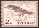 Sellos de America - Uruguay -  Zorzal