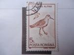 Stamps Romania -  Calidris Alpina.