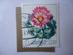 Stamps Germany -  Flora: Cactus Flowers (Mi/2802)