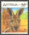 Stamps Australia -  Red kangardo-canguro rojo