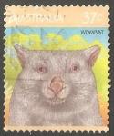 Sellos de Oceania - Australia -  Wombat-