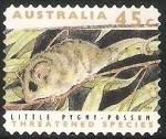 Sellos de Oceania - Australia -  Little pygmy possum-pósum pigmeo