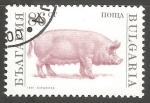 Stamps Bulgaria -  Sus scrofa domestica-cerdo