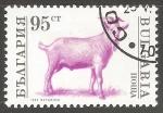 Sellos de Europa - Bulgaria -  Capra hircus-cabra