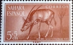 Stamps : Europe : Spain :  Intercambio mxb 0,20 usd 5 +5 cent. 1955