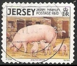 Sellos del Mundo : Europa : Reino_Unido : Jersey- cerdos
