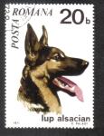 Sellos de Europa - Rumania -  Perros 71, German Shepherd (Canis lupus familiaris)