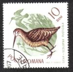 Sellos de Europa - Rumania -  Pájaros