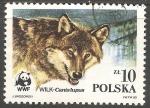 Sellos de Europa - Polonia -  Canis lupus-lobo