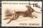 Sellos de Europa - Rumania -  Oryctolacus-Conejo común