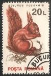 Sellos de Europa - Rumania -  Sciurus vulgaris-ardilla roja