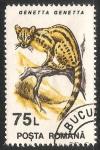 Sellos de Europa - Rumania -  Genetta genetta-gato almizclero