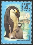 Stamps Russia -  Emperor penguins-pingüino emperador