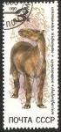 Sellos de Europa - Rusia -  Chalicotherium