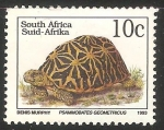 Sellos de Africa - Sudáfrica -  Psammobates geometricus-tortuga geométrica