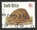 Sellos del Mundo : Africa : Sudáfrica : Psammobates geometricus-tortuga geométrica