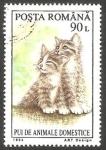 Stamps Romania -  4217 - Gatos, animal doméstico