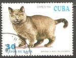 Sellos de America - Cuba -  Gatos de Raza- Britanico Azul pelo corto