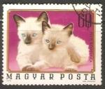 Sellos de Europa - Hungría -  Felis Domestica