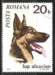 Stamps : Europe : Romania :  Lup alsacian