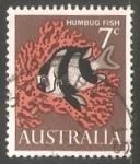 Sellos de Oceania - Australia -  Humbug Fish