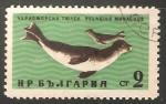 Stamps Bulgaria -  Pelagius monachus-