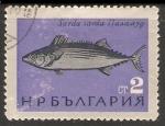 Stamps Bulgaria -  Sarda Sarda-Bonito atlántico