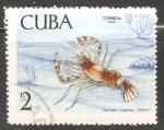 Sellos de America - Cuba -  Stenopus hispidus