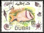 Sellos del Mundo : Asia : Emiratos_Árabes_Unidos : Fork Fish