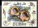 Sellos de Asia - Emiratos Árabes Unidos -  Striped butterflyfish