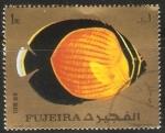 Stamps : Asia : United_Arab_Emirates :  Caetodontoplus mesoleucus