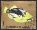 Stamps : Asia : United_Arab_Emirates :  Rhinecanthus aculeatus