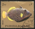 Stamps : Asia : United_Arab_Emirates :  Balistapus undulatus