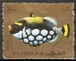 Stamps : Asia : United_Arab_Emirates :  Balistoides conspicillum