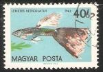 Sellos de Europa - Hungría -  Lebistes Reticulatus