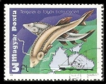 Stamps Hungary -  Environmental protection of rivers and seas