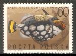 Sellos de Europa - Polonia -  Spotted triggerfish