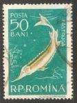 Sellos de Europa - Rumania -  Pastruja- estrujon