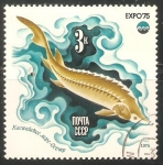 Stamps : Europe : Russia :  Expo 75