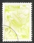 Sellos de Asia - Vietnam -  Betta splendens