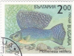 Sellos de Europa - Bulgaria -  pez- Mollienesia velifera