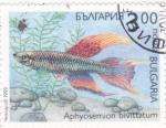 Sellos de Europa - Bulgaria -  pez- aphyosemion bivittatum